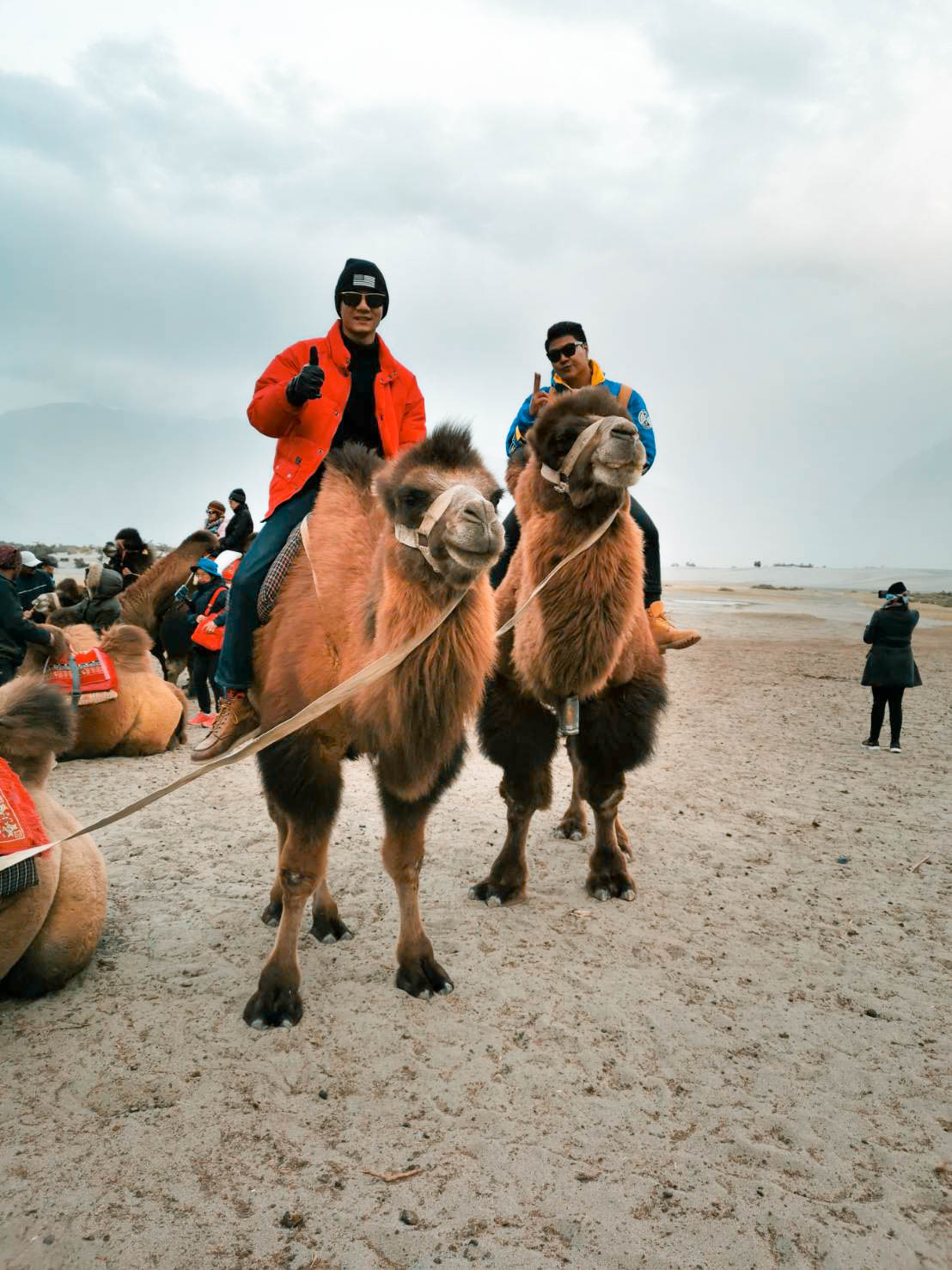 อูฐสองหนอก นูบร้าวัลเลย ทัวร์เลห์ ลาดักห์ เที่ยวเลห์ ลาดักห์ Leh Ladakh Tour leh ladakh