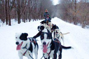 หิมะ หน้าหนาว สุนัขลากเลื่อน
