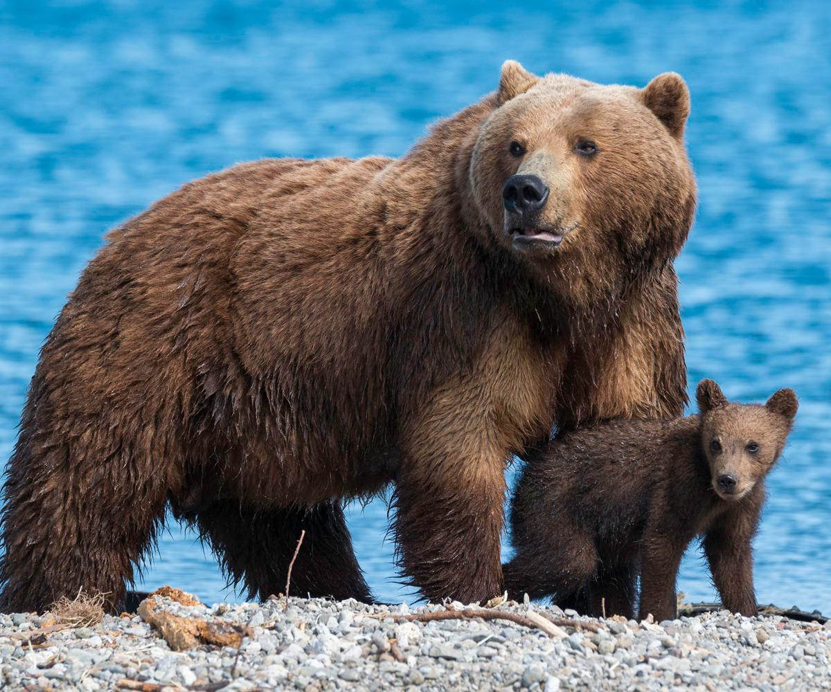 ทัวร์รัสเซีย หมีคัมชัตคา